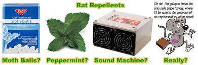 rat repellent natural home remedy