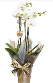 gifts remembered orchids