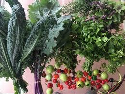 planting fall edible garden