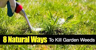 garden weeds 8 ways on killing weeds