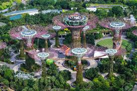 day view of the supertree grove