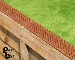 Brown Wall Fence Spikes Anti Cat Birds Deter Repellent Intruder Animal Security Ebay
