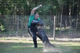 ta fl german shepherd breeder with