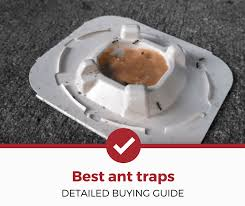 top 5 best ant traps reviewed 2020