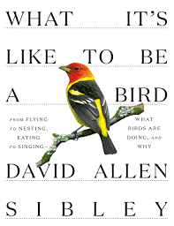 What It's Like to Be a Bird: From Flying to Nesting, Eating to ...