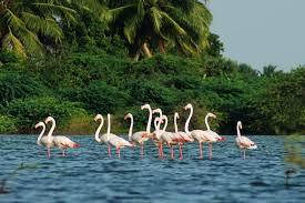 Kumarakom Bird Sanctuary, Kerala — Go Caribou