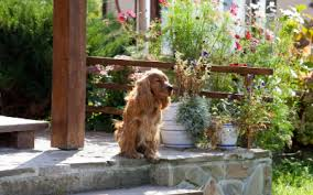 The Pros And Cons Of Invisible Fences For Dogs Vca Animal Hospital