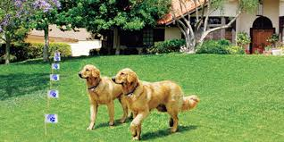 Trade In Your Existing Electronic Dog Fence