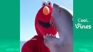 shark puppet beyond vine funny shark