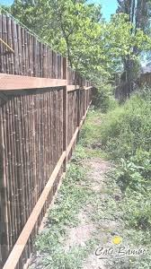 Pin By Mary J Burt On Fencing Bamboo Fence Fence Landscaping Short Fence