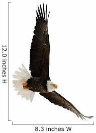 Bald Eagle Haliaeetus Leucocephalus Wall Decal Wallmonkeys Com