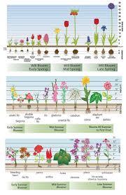 spring planted bulbs