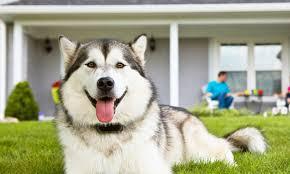 Motorola Wireless Travel Pet Fence Groupon