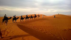 human riding camel on dessert image pure stock image