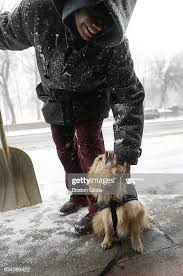 """Handywoman Sonja Mitchell checks on her 4-year-old dog """"7,"""" between... News  Photo - Getty Images"""