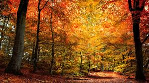 best fall quotes fun sayings about autumn