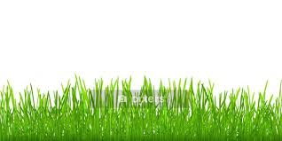 Seamless Green Grass Wall Decal Pixers We Live To Change