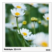 White Daisies In A Field Customized Daisy Wall Sticker Zazzle Com