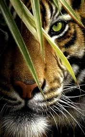 tiger live wallpaper android apps