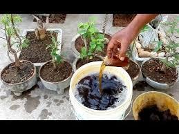 how to make liquid organic fertilizer