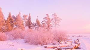 winter snow trees pink wallpaper