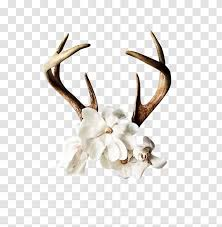 Reindeer Antler Flower Wall Decal Art Antlers Transparent Png