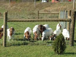 What Is The Best Fence For Your Livestock
