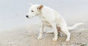 how can t help dogs with kidney disease