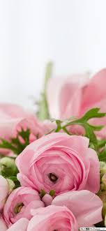 باقة جميلة من الورود الوردية تنزيل خلفية Hd