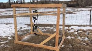 simple magpie bird trap you