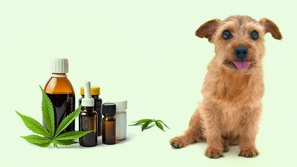 Image result for cbd products for pets