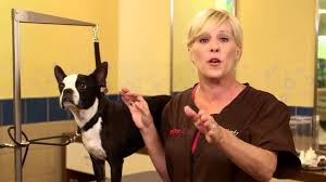 how to cut your dog s nails petco