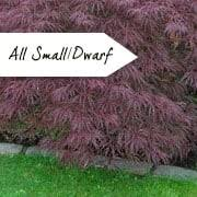 ornamental trees for small gardens