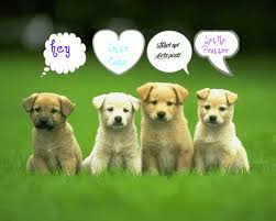 24120 cute kittens and puppies wallpaper