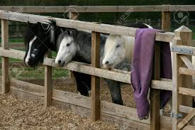 Three Horses Looking Through Fencing Of Woodchip Enclosure, Ada.. Stock  Photo, Picture And Royalty Free Image. Image 27598214.