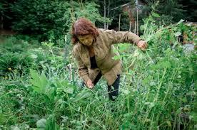 how to weed a garden wild abun