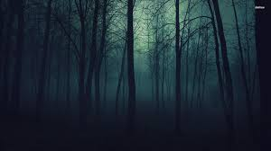 dark forest wallpapers top free dark