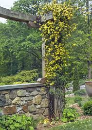 Perennial Picks That Make Quick Climbers This Old House