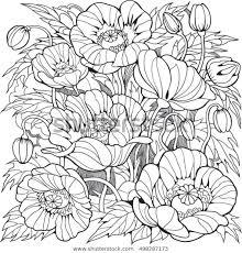 Papaver Bloemen Kleurplaat Voor Volwassenen En Stockvector
