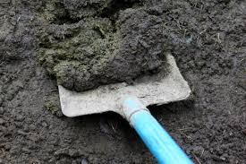 using cow manure in your garden