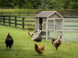 American Farmworks Electric Fencing Guide Poultry