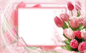 تحميل خلفيات الوردي الزنبق الإطار 4k الأزهار المفاهيم إطارات