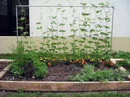 bed vegetable garden home design ideas
