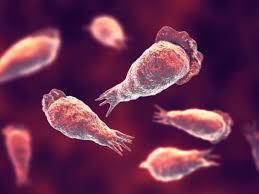 Qué es la ameba