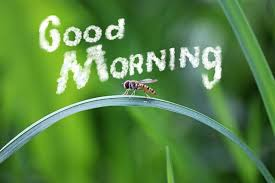 151 special good morning wishes