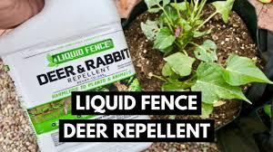 Liquid Fence Deer And Rabbit Repellent Review Youtube