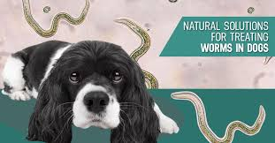 preventing and treating worms in dogs