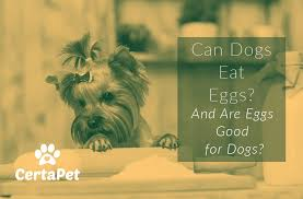 can dogs eat eggs and are eggs good