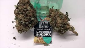 laughing buddha strain