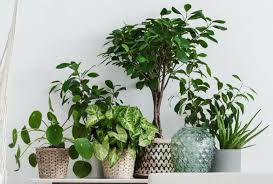 how to fertilize houseplants naturally